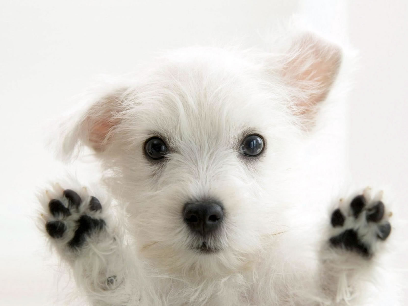 So cute puppies wallpaper 15897245 fanpop - Funny And Cute Dog Pictures 40 Cool Wallpaper Funny And Cute Dog Pictures 40 Cool Wallpaper