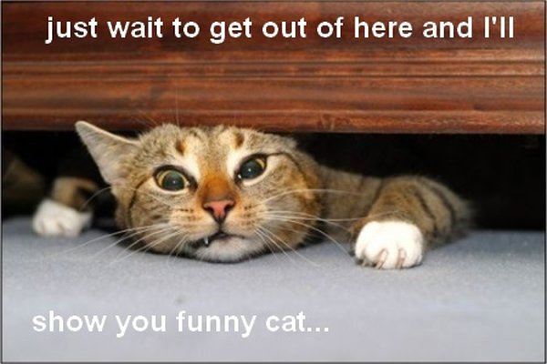 Funny Angry Cats 48 Free Hd Wallpaper