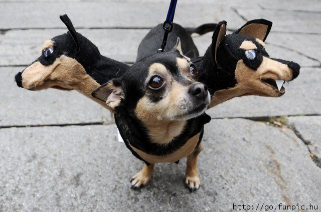 Funny Animal Costumes 29 Desktop Wallpaper