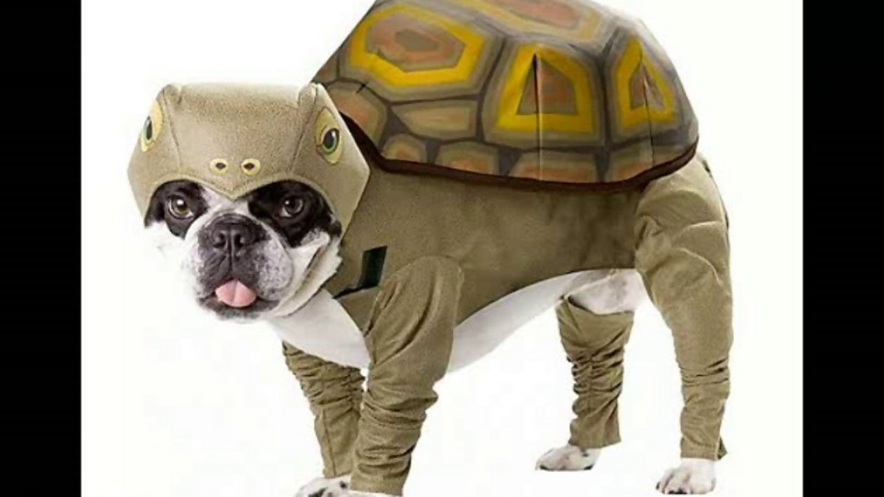 Funny Animal Costumes 4 Free Hd Wallpaper