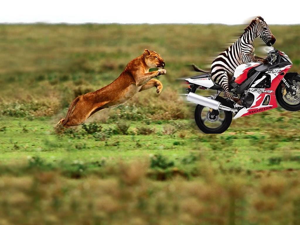 Funny Animals Pictures 35 Desktop Background