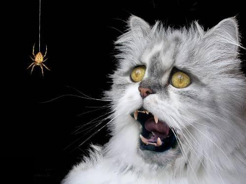 Funny Cats Being Scared 17 Free Hd Wallpaper