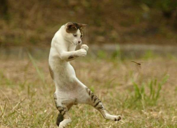 Funny Cats Dancing 19 Wide Wallpaper