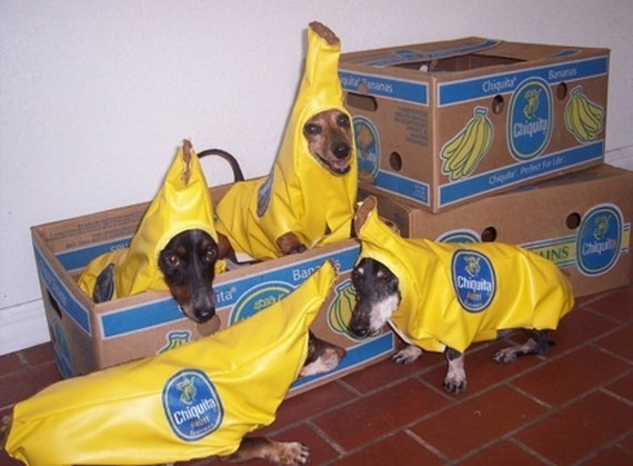 Funny Costume For Dogs 11 Cool Wallpaper