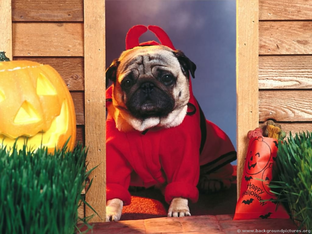 Funny Costume For Dogs 17 Cool Wallpaper
