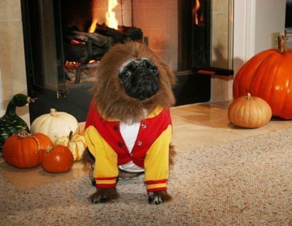 Funny Costume For Dogs 37 Cool Hd Wallpaper