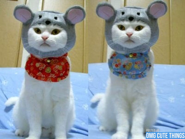 Funny Costumes For Cats 11 Desktop Wallpaper