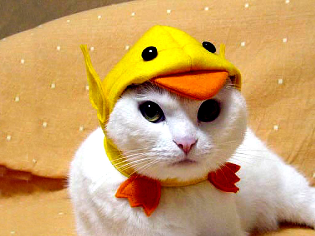 Funny Costumes For Cats 2 Desktop Wallpaper
