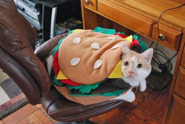 Funny Costumes For Cats 20 Desktop Wallpaper