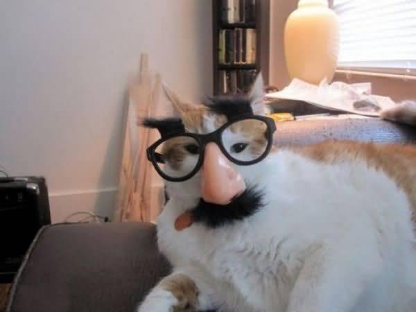 Funny Costumes For Cats 33 Desktop Wallpaper & Funny Costumes For Cats 33 Desktop Wallpaper - Funnypicture.org