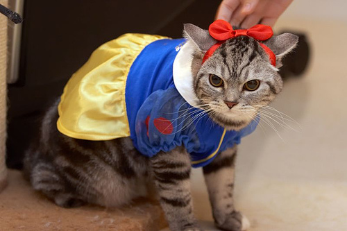 Funny Costumes For Cats 39 Cool Hd Wallpaper & Funny Costumes For Cats 39 Cool Hd Wallpaper - Funnypicture.org