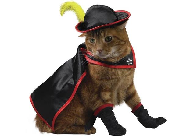 Funny Costumes For Cats 7 High Resolution Wallpaper