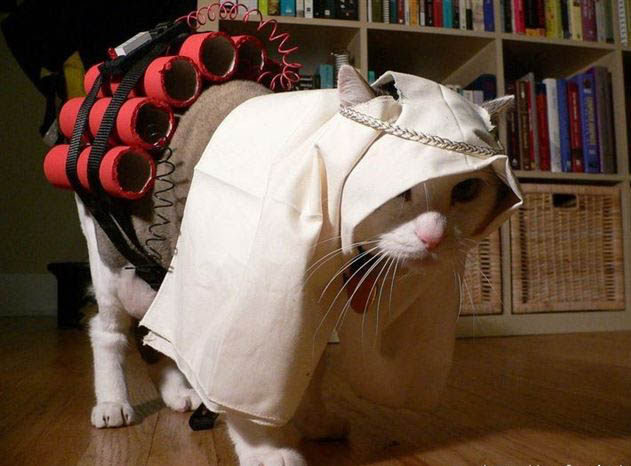 Funny Costumes For Cats 8 Wide Wallpaper