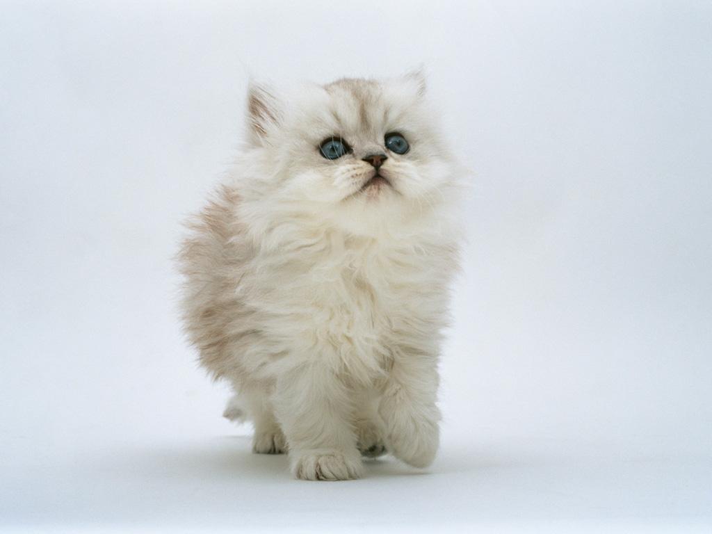Funny Cute Cats  10 Free Wallpaper