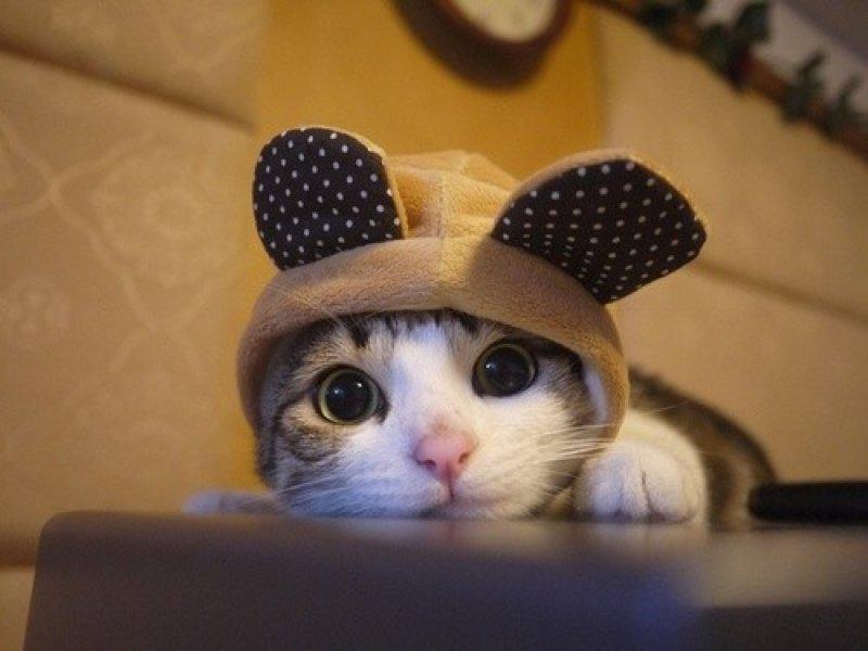 Funny Cute Cats  14 Widescreen Wallpaper