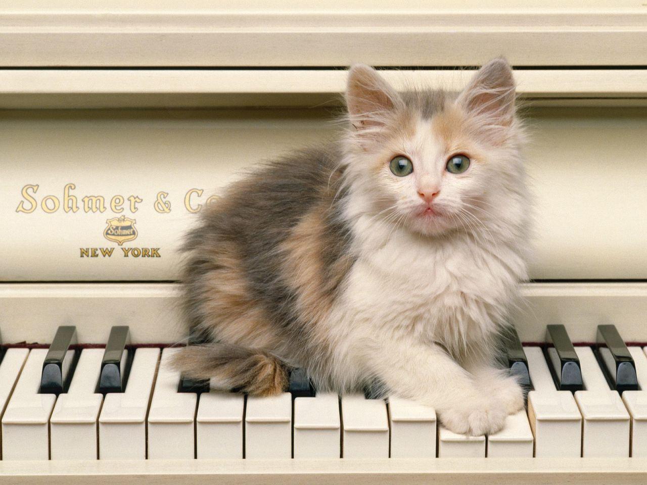 Funny Cute Cats  2 Widescreen Wallpaper