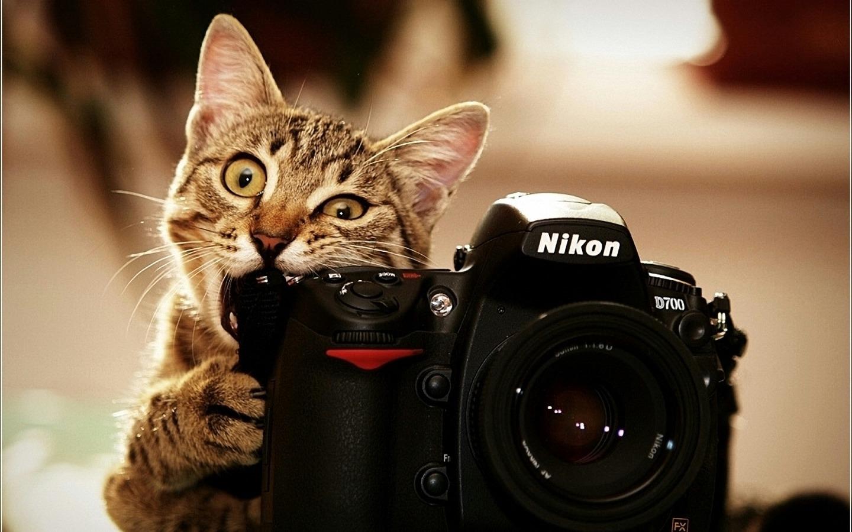 Funny Cute Cats  28 Free Wallpaper