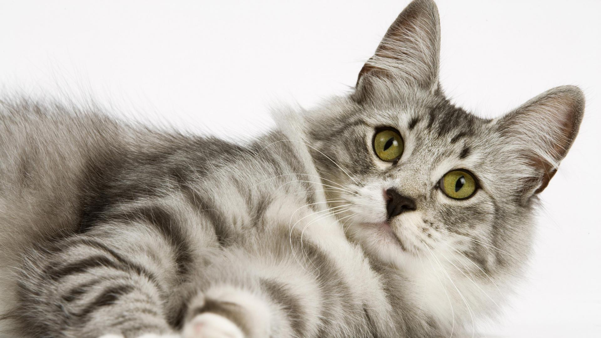 Funny Cute Cats  36 Free Hd Wallpaper