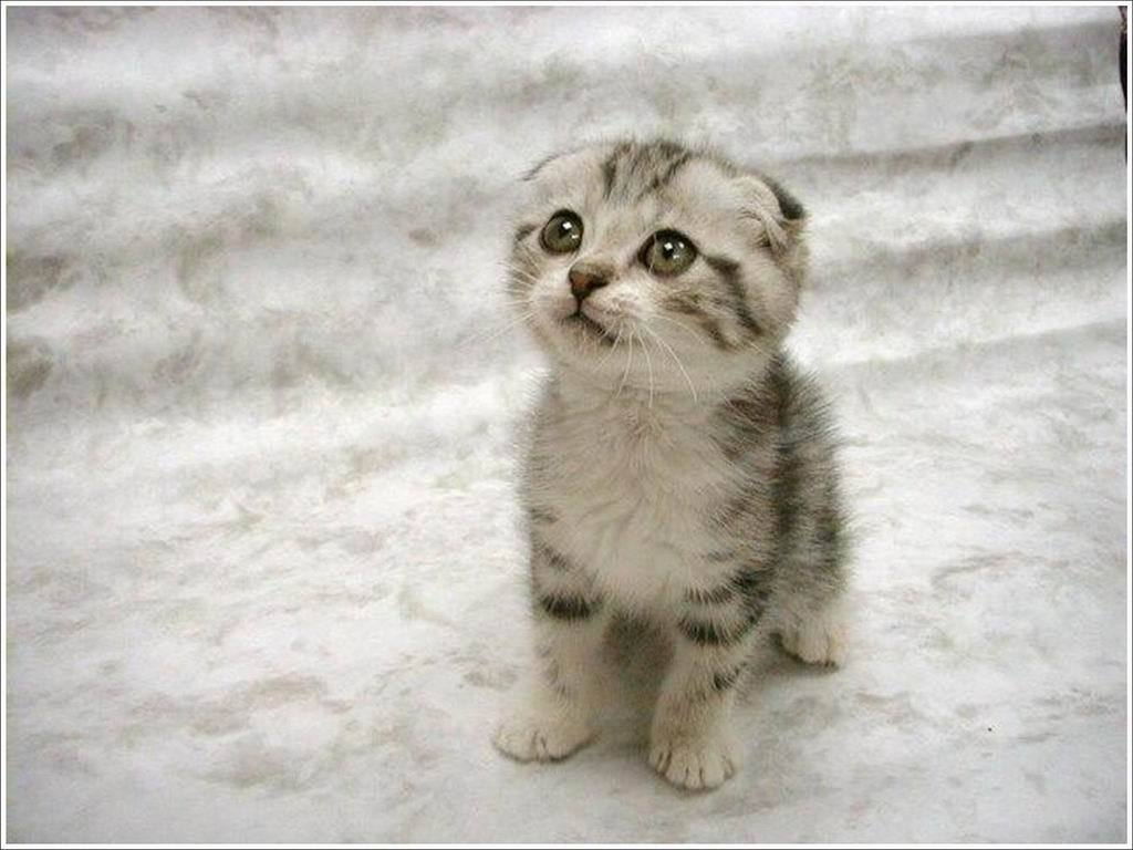 Funny Cute Cats  40 High Resolution Wallpaper
