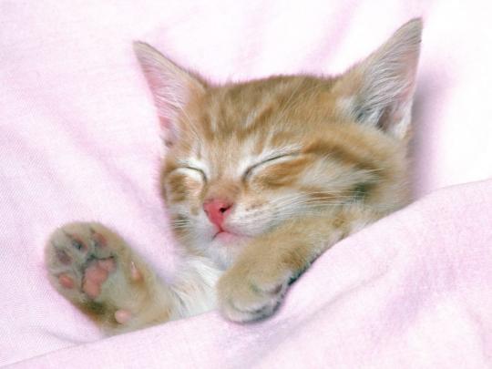 Funny Cute Cats  5 Hd Wallpaper