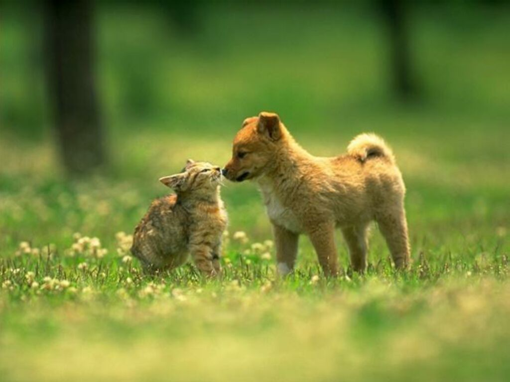 Funny Dogs And Cats Living Together 23 Hd Wallpaper