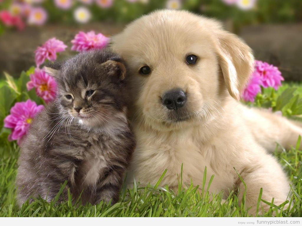 Funny Dogs And Cats Living Together 30 Desktop Background ... Funny Pics Of Cats And Dogs Together
