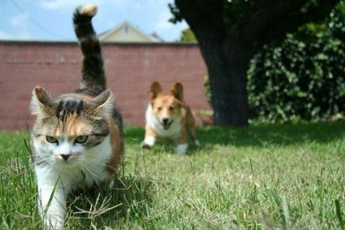 Funny Dogs Annoying Cats 6 Free Wallpaper