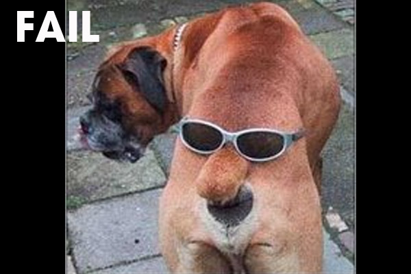 Funny Fails Animals 27 Desktop Wallpaper