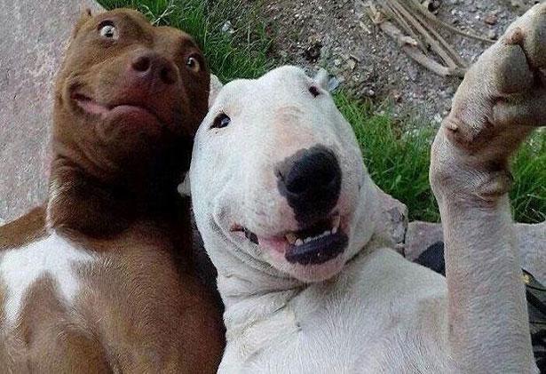 Funny Selfies Images 14 Widescreen Wallpaper