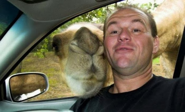Funny Selfies Pictures 6 Free Wallpaper