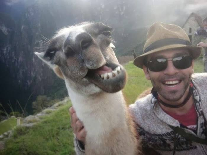 Funny Selfies Quotes 13 Background Wallpaper