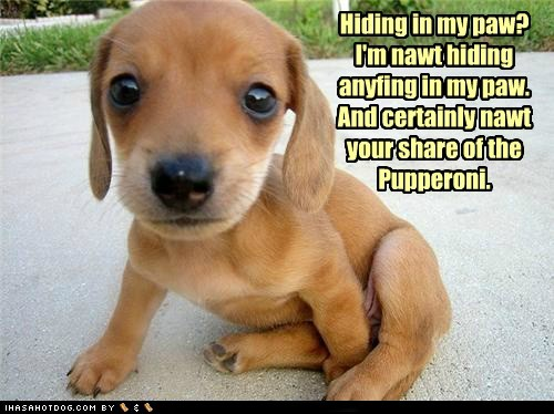 funny puppies pictures - photo #24