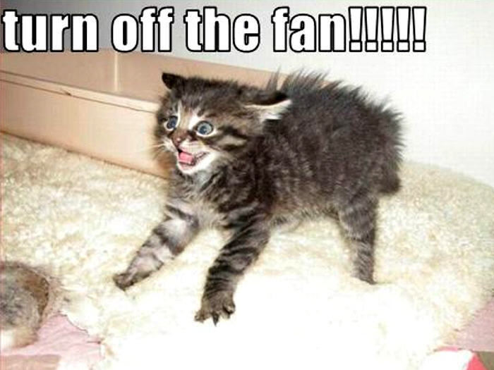 funny animals wallpapers cats - photo #5