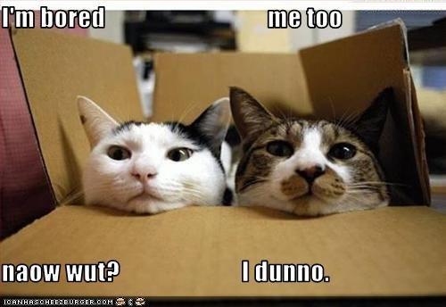 Funny Animals Cats 20 Desktop Wallpaper