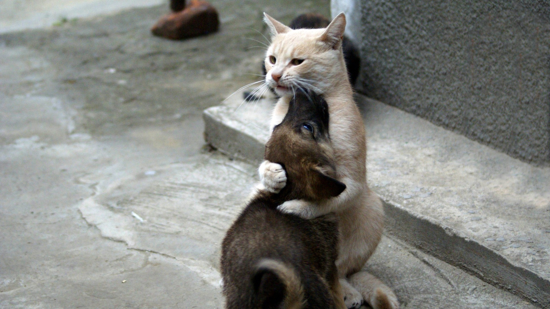 Dog Hugging Cat Meme