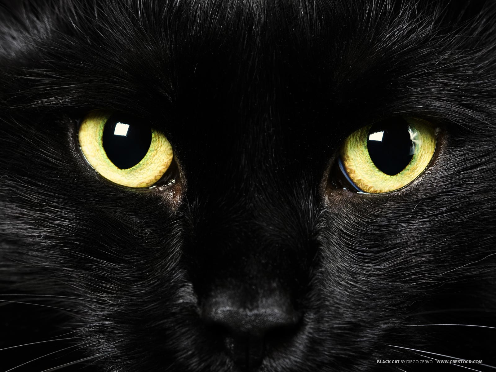 Funny Black Cat Pictures 1 Hd Wallpaper