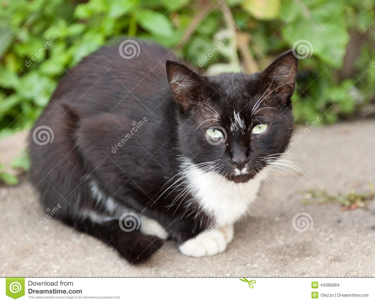 Funny Black Cat Pictures 28 Free Wallpaper