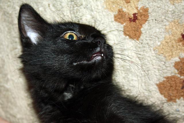 Funny Black Cat Pictures 35 Desktop Wallpaper