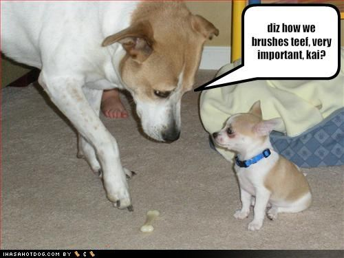 Funny Cartoon Dog 56 Hd Wallpaper