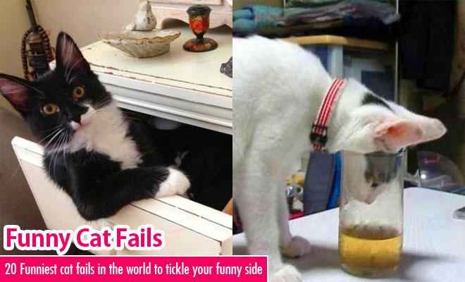 Funny Cat Fail Pics 19 Free Hd Wallpaper