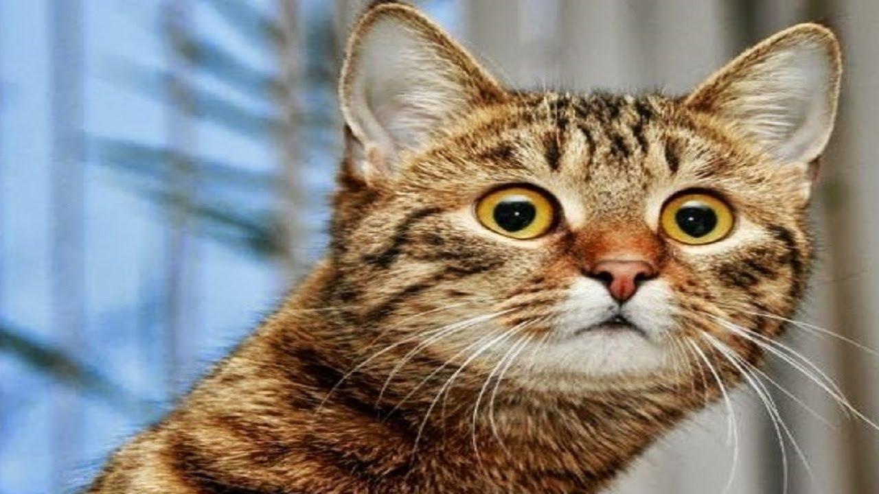 Funny Cat Fails  1 Cool Hd Wallpaper