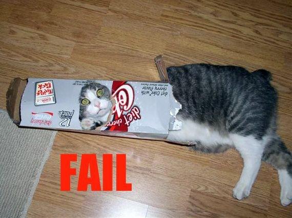 Funny Cat Fails 16 Wide Wallpaper