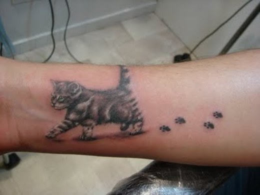 Funny Cat Tattoo On Stomach 18 Free Wallpaper