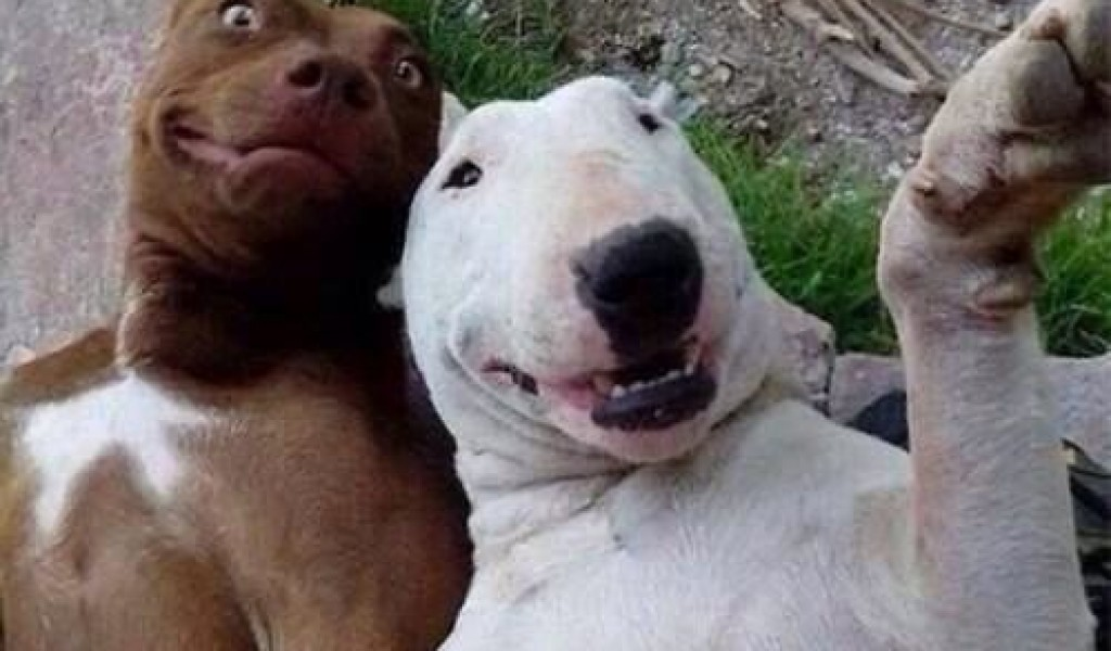 Funny Selfie Pictures 34 Desktop Background