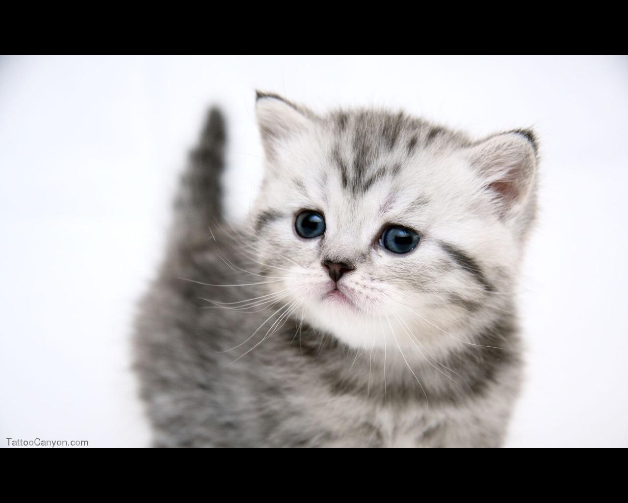 Very Funny Cat Photos 2 Desktop Wallpaper  Funnypictureorg
