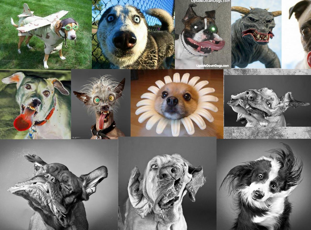 Weird And Crazy Dogs 13 Cool Wallpaper