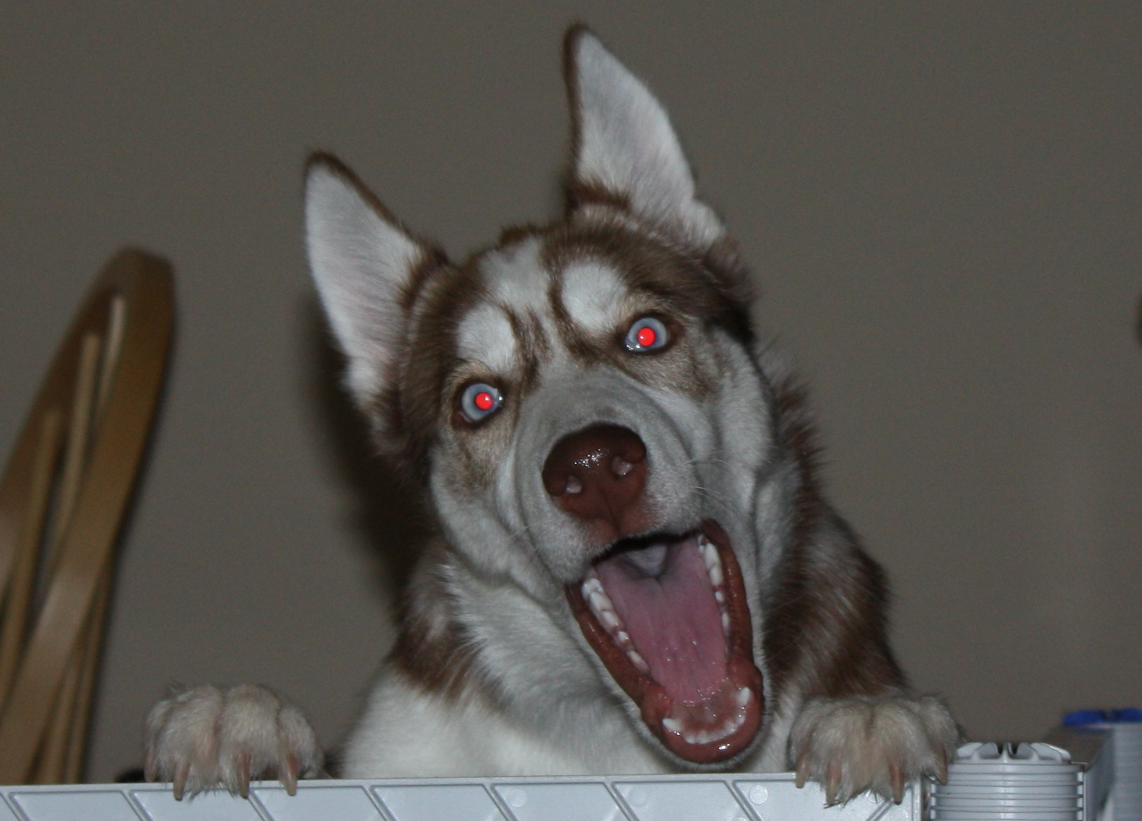 demented dogs - photo #30