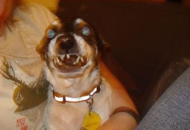 Weird And Crazy Dogs 9 Widescreen Wallpaper