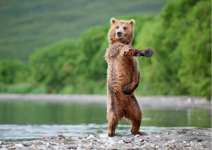 Funny Animals Dancing 19 Free Wallpaper