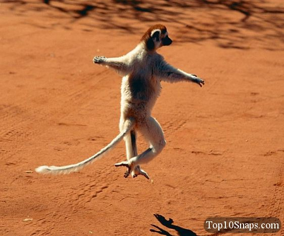 funny animals dancing 36 free hd wallpaper   funnypicture org